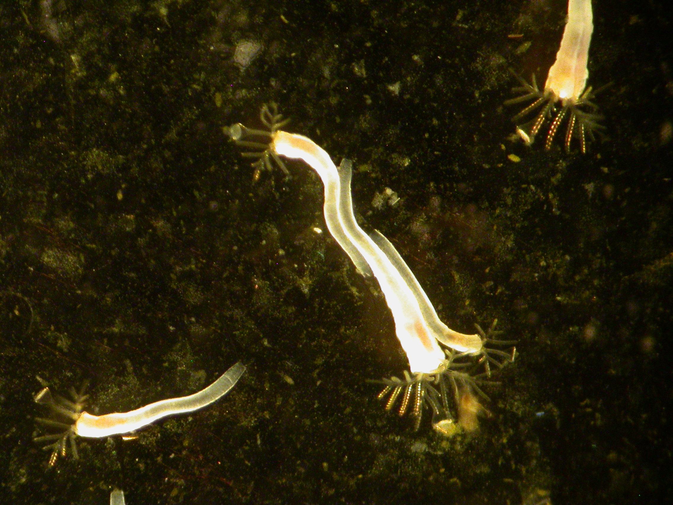 Fanworm fandom – The Cambrian Mammal